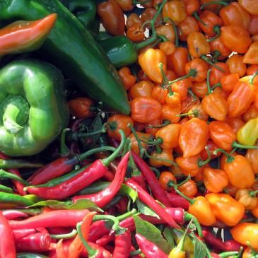 Food & Growing